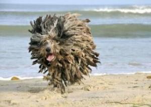 Ball-of-dog