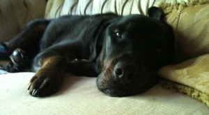 Monty-sofa-515x285