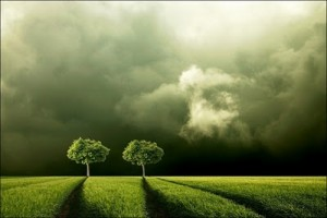 path-trees
